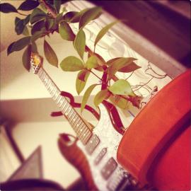ガジュマルとギター